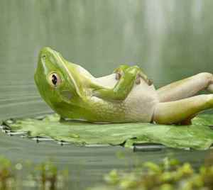 A frog in deep concentration